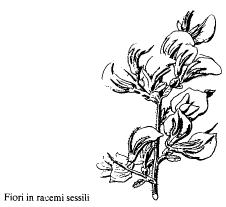 Immagine 1